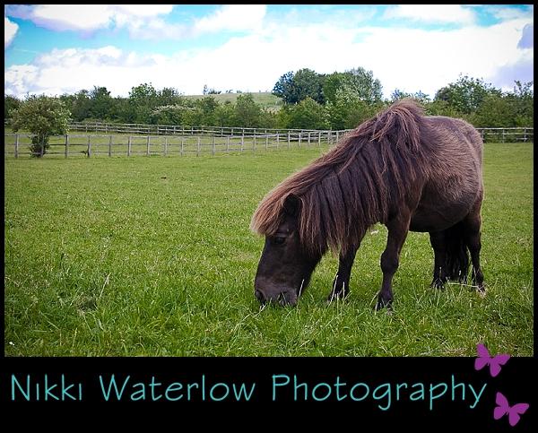 Nikki Waterlow Photography: Pet Photography: Equestrian